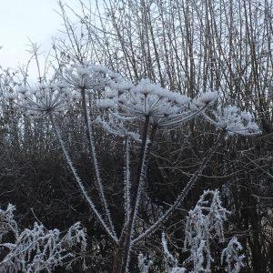 January Hoar Frost