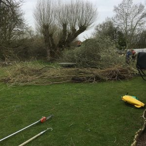 Tree clearance starts