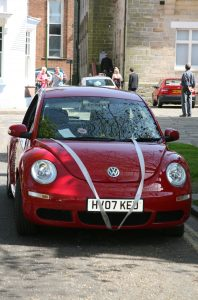 Cherry Red Beetle